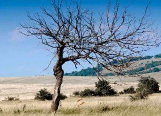allarme siccità in lombardia