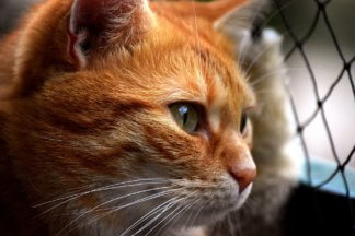 """gatto-324x216 Al Crazy Cat Café apre la mostra """"I gatti del cuore"""" Intrattenimento tempo libero"""