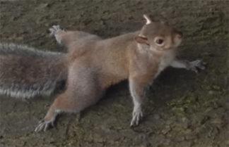 scoiattolo-324x209 Roma, qui Lombardia. Cambiate la legge sulla fauna selvatica Ambiente Costume e Società