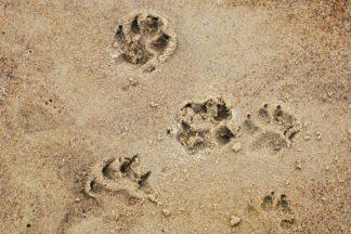 cane-mare-324x216 Campagna contro l'abbandono degli animali #TUTTESCUSE Cronaca Milano Prima Pagina