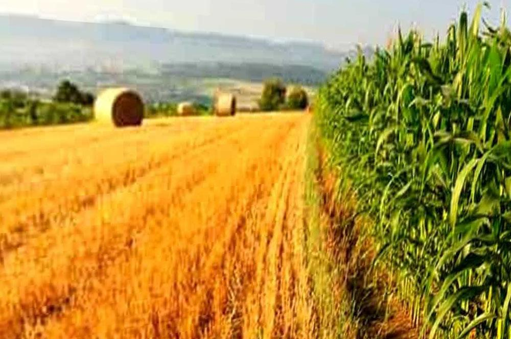 campo-agricolo Dossier agricoltura Lombardia Prima Pagina